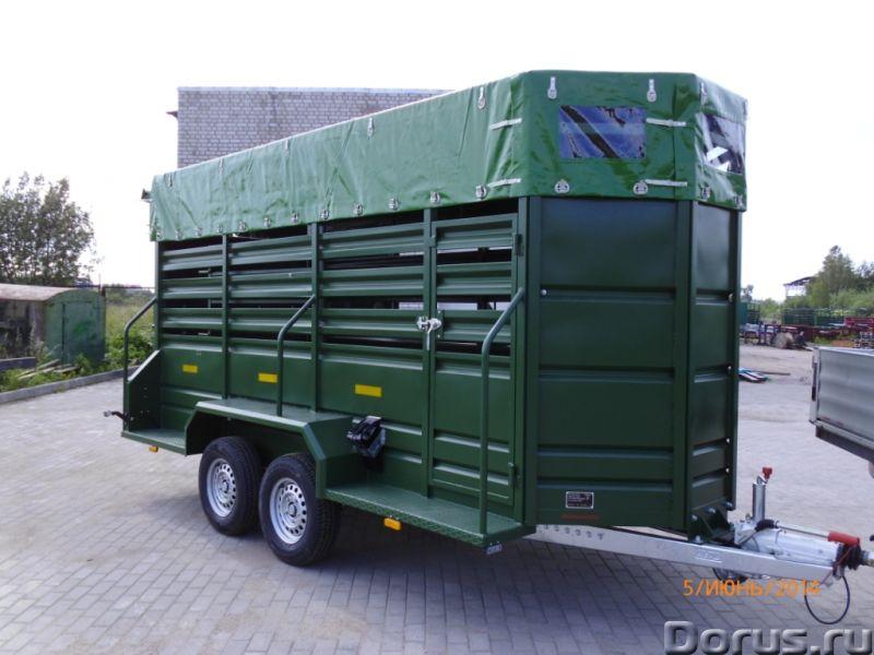 Прицеп для лошадей и КРС - Грузовые автомобили - Допустимая общая масса 3400 кг Грузоподъёмность 180..., фото 3